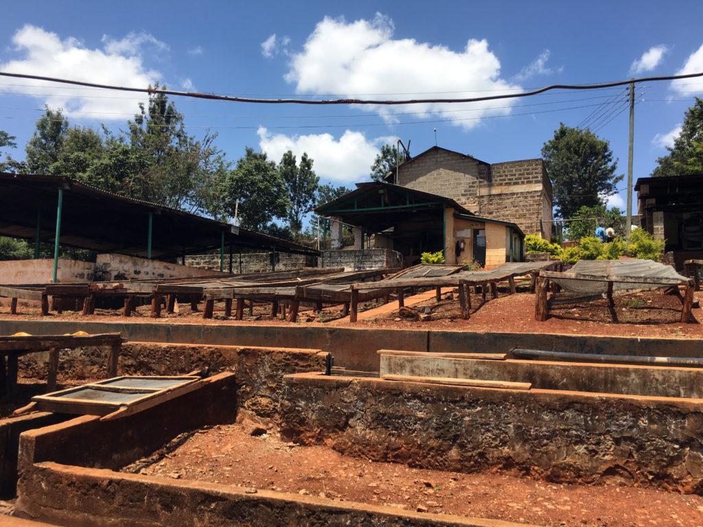 Kenya CRI Rukera Washing Station