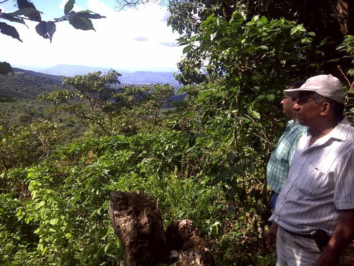 El Salvador Finca Lorena