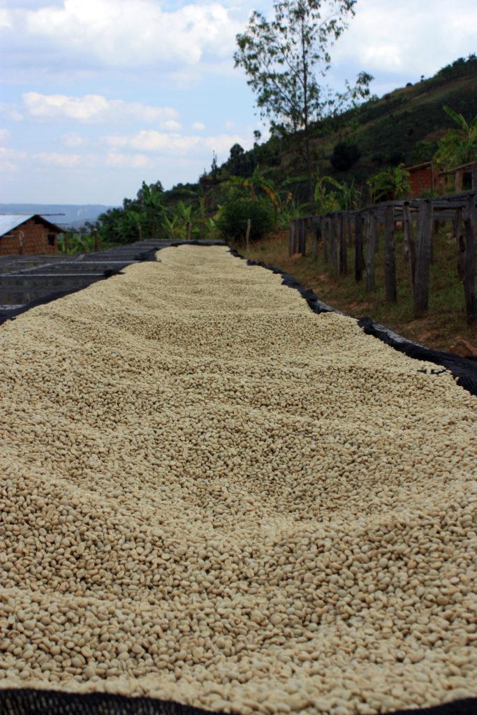 Rwanda Musasa coffee