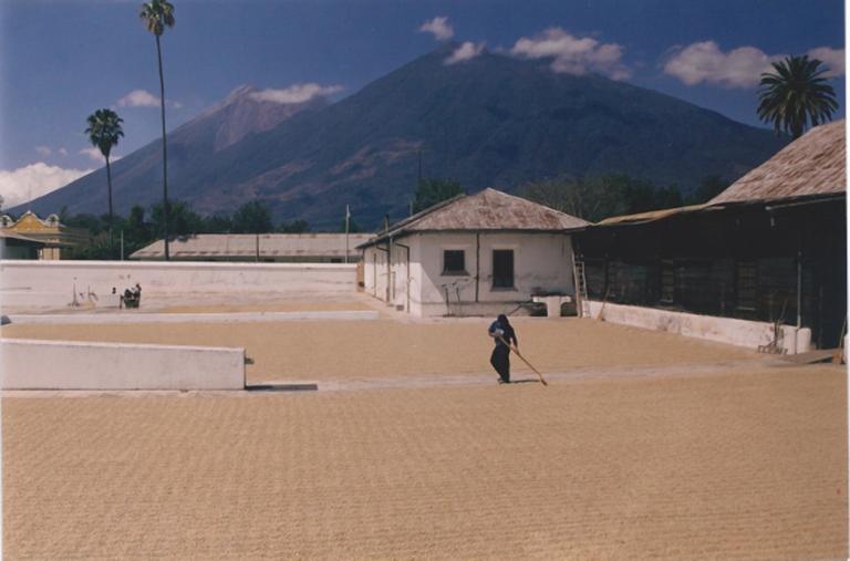 Guatemala Finca San Rafael Urias Patios