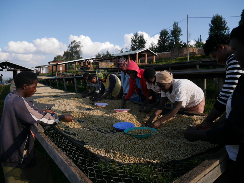 Sorting Rwanda Musasa Ruli