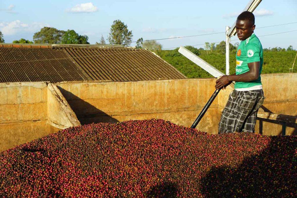 Kenya Mchana coffee